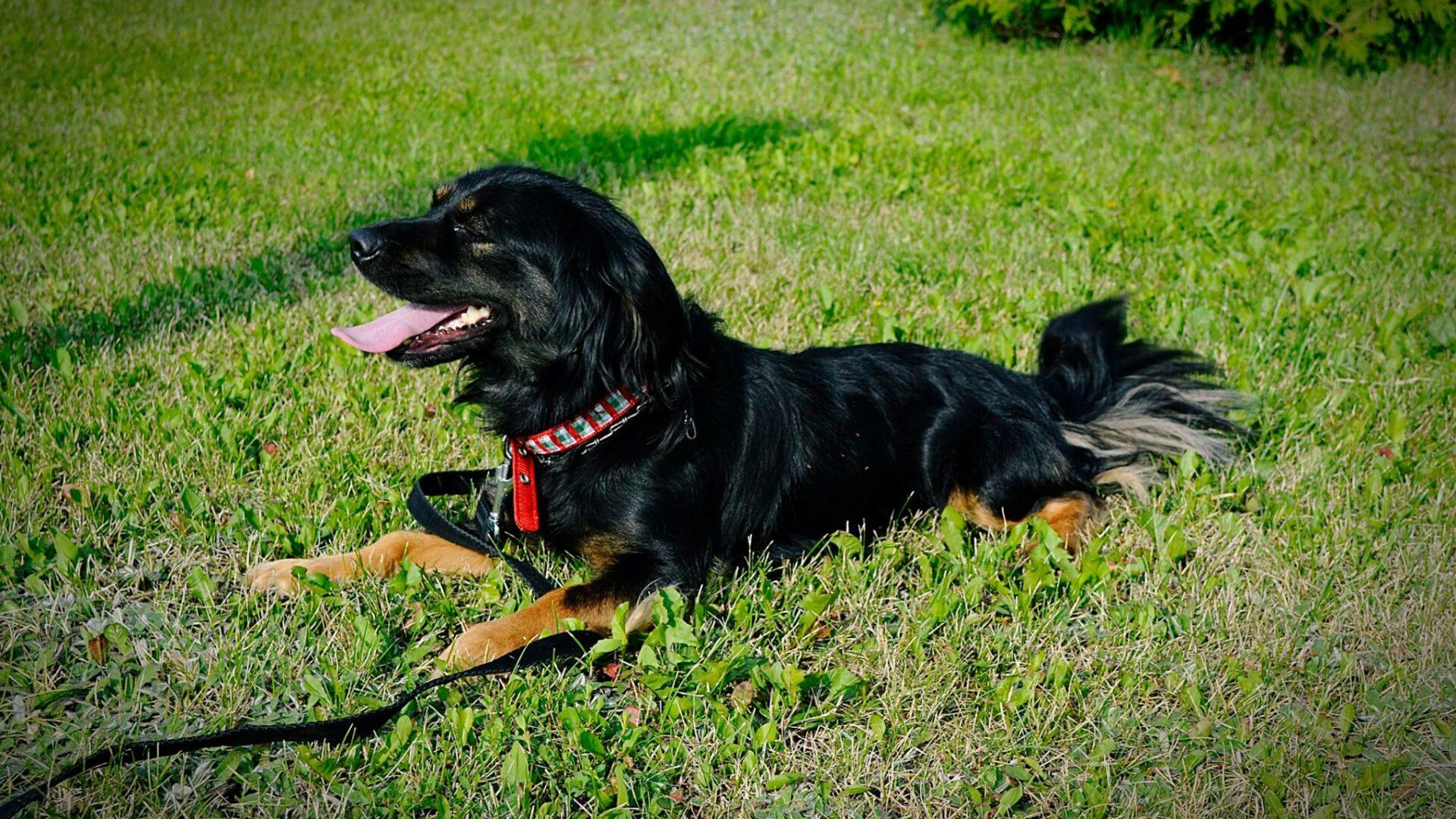 Piksel - najradośniejszy pies pod słońcem