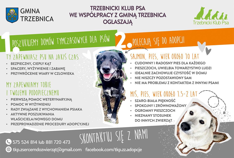 Poszukujemy domów tymczasowych dla psów!